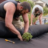Planting shrubs through weed cloth